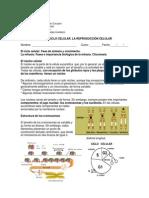 guia_el_ciclo_celular.pdf