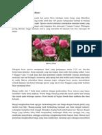 Hortikultura Bunga Mawar
