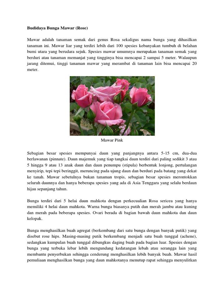 Bagian Bunga Mawar Dan Cara Penyerbukannya