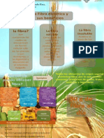 fibra nutricion