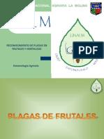 Entomologia Agricola GEM - Frutales - Segundo Repaso (1)