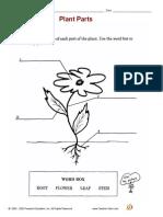 Worksheet Parts Of a Flower