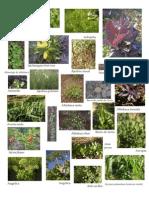 Catalogo de Semillas Organicas.fotos