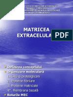 matrice_extracelulara