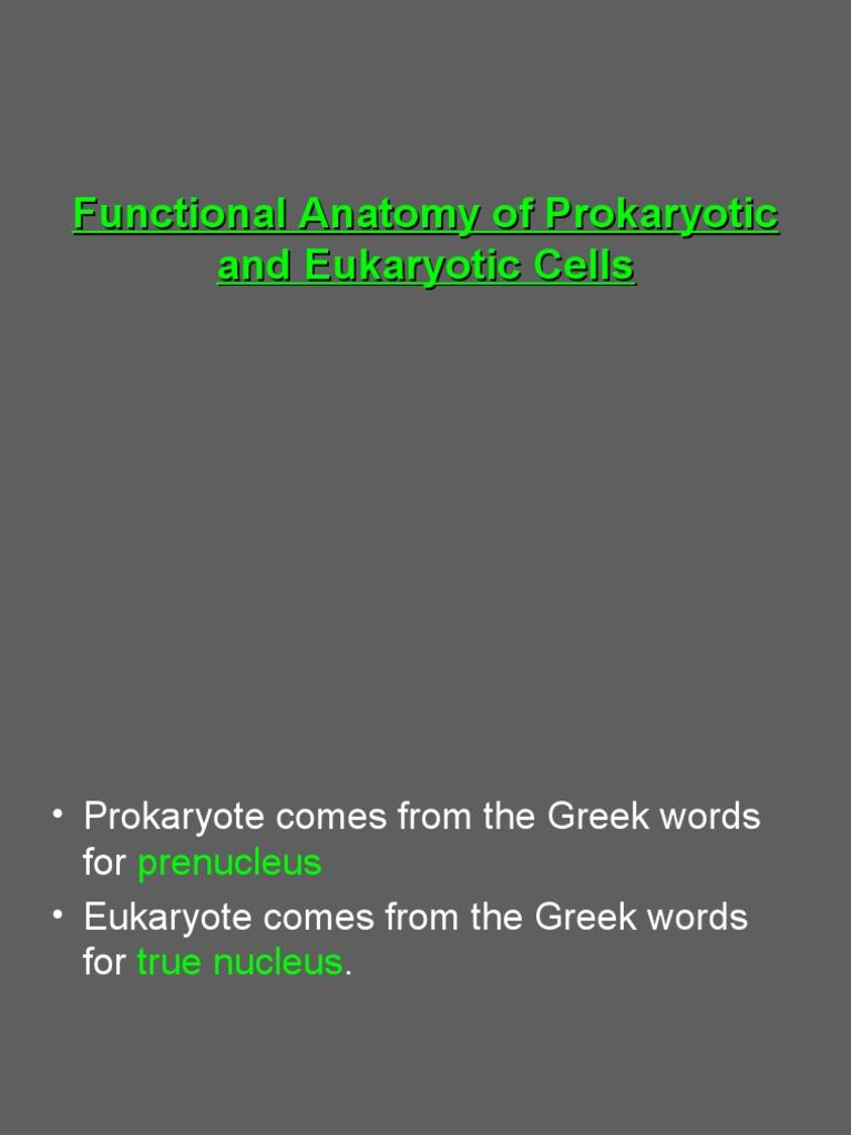 Prokaryotic & Eukaryotic Cells- 3   Cell Membrane   Cell (Biology)