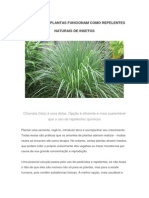 Tipos de Plantas Funcionam Como Repelentes Naturais de Insetos