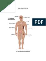 trabajo sistema inmune 2do corte.docx
