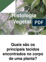 Histologia Vegetal Slides