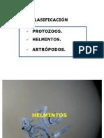 nematoidkd