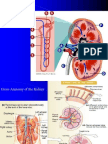 Renal Physiology 551