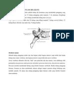 Anatomi Fisiologi Tulang Belakang PDF