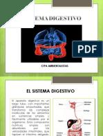 El Sistema Digestivo Diapositivas