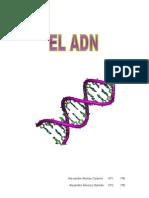 elcidodesoxirribonucleico-100330173828-phpapp01.doc