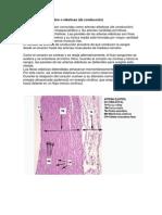 Arterias Elásticas y Venas de Gran calibre.docx