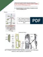 Biologia - Fisiologia Vegetal - 10 Floema Transporte