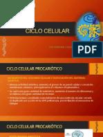 Ciclo Celular - Unjfsc
