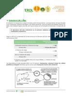 Colesterol LDL HDL