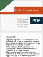 TRADUCCIÓN  (Transduction)