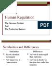 Human Regualtion Nervous System