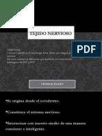 Clase # 12 Tejido Nervioso