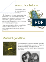 Cito Plasma Bacteria No
