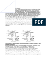 Morfologi Planaria