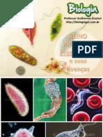 Protozoários-e-Protozooses