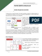 Apuntes Genetica Molecular