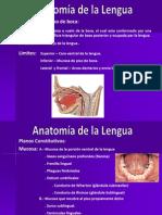 Aparato Bucal, Anatomia de La Lengua
