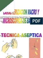 4 Caracterizacion Macro y Microscopica de Bacteria