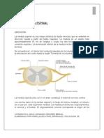 Medula Espinal,Bulbo Raquideo y Pro Tube Ran CIA