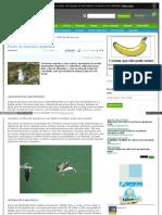 naturlink_sapo_pt_Natureza_e_Ambiente_Fichas_de_Especies_con.pdf
