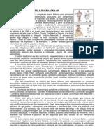 Texto Complementar - Commedia Dell'Arte