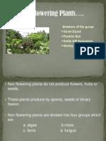 Non Flowering Plants (Science)