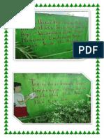 SDN46Parepare-LUKISAN Pada Tembok Sekolah