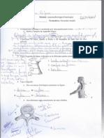 Alexandre Raposo - Osteologia0001
