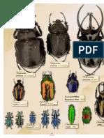 El señor de los escarabajos