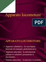 locomotore-muscoli
