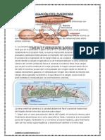 circulacinplacentaria-130822180955-phpapp02
