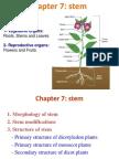 Presentation Organization of Plants 56tt