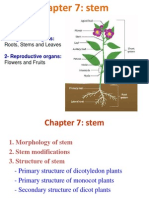 Presentation Organization of Plants 56tt