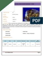 Atlas Mineralogico - Unjbg