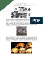 periodos entomologicos