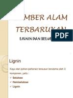 1 lignin+selulosa