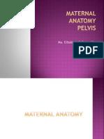 Maternal Anatomy