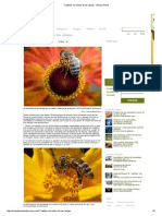 7 hábitos increíbles de las abejas - Animal Planet