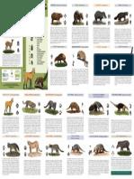 identificando_mamíferos_da_floresta_de_t