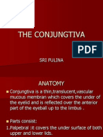 The Conjungtiva