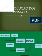 aevoluodosprimatas-120416165756-phpapp02
