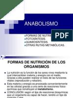 Anabolism o